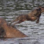 A amizade entre um cão e um elefante