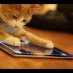 A estranha relação dos animais com o iPad