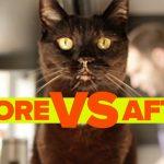 A vida antes e depois de ter um gato