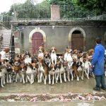 Alimentar 120 cães de uma só vez