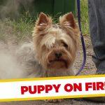 Apanhados – Cão em chamas