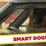 Apanhados – O cão que conduz sozinho