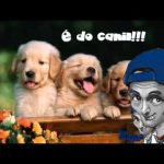 Apanhados – Xano – É do canil… para o Zé Manel Bananeiro – ERA FM