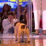 Cadela de Rita Pereira faz cocó em direto na gala do Big Brother Vip – TVI – 26 de Maio