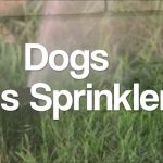 Cães e os sistemas de rega automático