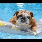 Cães que adoram água