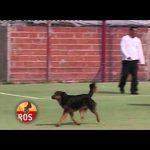 Cão ajuda a marca um golo