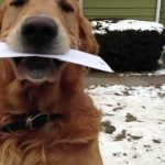 Cão ajuda carteiro a entregar a correspondência
