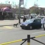 Cão arranca a matrícula ao carro