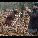 Cão com queda para a acrobacia