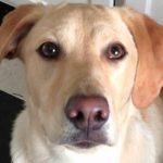 Cão consegue trocar os olhos