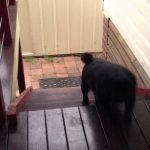 Cão sobe escadas de uma maneira estranha
