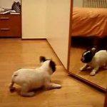 Cão vê-se ao espelho