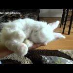 Coelho bebé a dormir