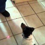 Como entreter um cão durante horas …só com um laser