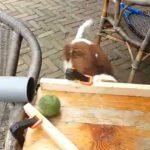 Como manter um cão entretido por horas