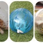 E os gatos divertem-se com bolas