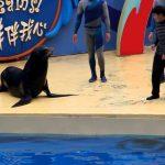 Fail – Beijo a leão marinho corre mal