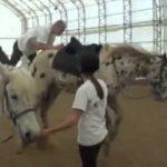 Fail – Como não montar um cavalo