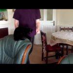 Fail – Gato salta para cima da mesa e escorrega
