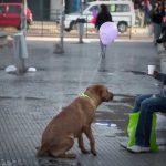 Forma original de chamar atenção para o problema dos cães abandonados