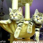 Gatinhos observam atentamente partida de ténis