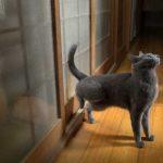 Gato bate à porta como gente grande