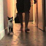 Inversão de papéis – Gato passeia o dono