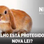 Nilton – O coelho está protegido pela nova lei? – Café da Manhã – RFM