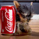 O cão mais pequeno do mundo