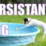 O cão mais persistente do mundo