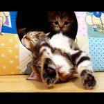 O gato mais educado que já viram