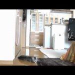 O melhor guarda redes do mundo é … um gato