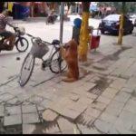 O que fazer para não lhe roubarem a bicicleta?
