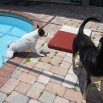 Os cães mais desajeitados que já viram