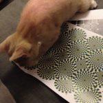 Os gatos e as ilusões ópticas