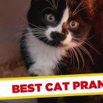Os melhores apanhados com gatos