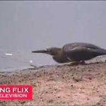 Pássaro com queda para a pesca