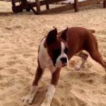Reacção de um cão ao provar um limão