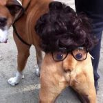 Sugestão para disfarce de cão para o Halloween