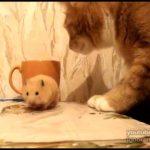 Tom e Jerry na vida real